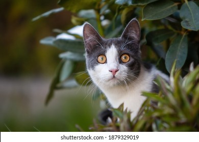 Close up of a white and grey cat with yellow eyes. It is young and curious, surrounded by plants and only the face is visible. Looking to the side just above the camera.