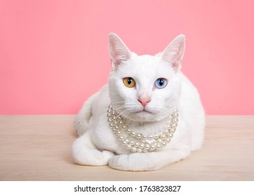 Close up of a white Khao Manee cat with heterochromia wearing a pearl neclace, laying on a wood table with pink background with copy space.