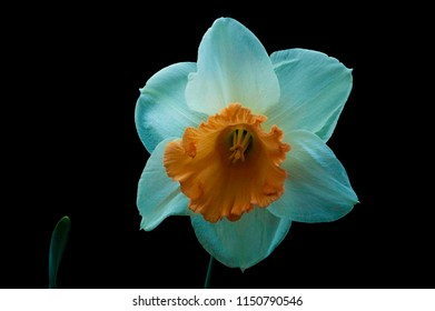 Close up of white orange flower