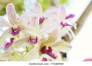 close up of white orchid with pink nature background