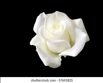 black and white rose images stock photos vectors shutterstock