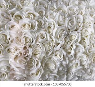 Close up white roses background