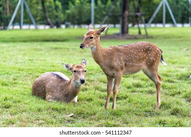 Close up of white spot deers on green grass.