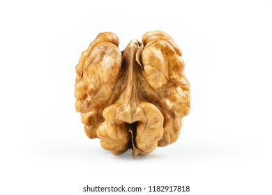 close up whole walnut kernel without shell on white background. healthy food for brain
