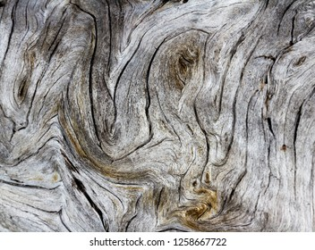 close up with a wide angle lens of an old fallen tree with interesting patterns and swirls