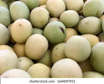 A close up of the wild African Marula Fruits.