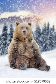 Close wild brown bear in winter time