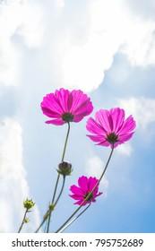 close up of wild flower in summer