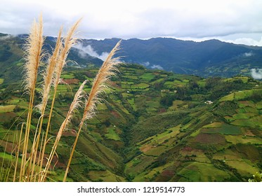Close Up of Wild Pampas Grasses against Lush Plantations on the Mountain Ranges of Amazonas Region, Northern Peru, South America