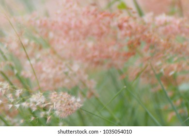 Close up of wildflowers and plants in sunny field. Flowers grass at relax morning time. Grass wild flowers in summer on a nature sofe blur background, intend to make it blur to be as a blackground.
