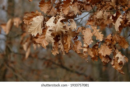 Close up of wilted leaves on tree