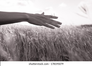 Close up of woman enjoying sunshine is wheat field