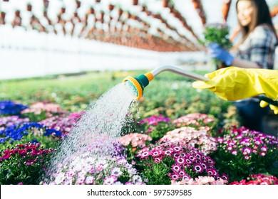 Close up of woman gardener watering plants in garden center.