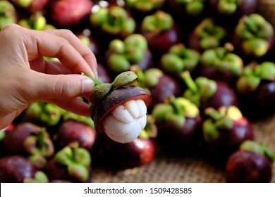 Close up woman hand hold fresh Mangosteen cut in half on blurred Mangostana Garcinia background, kind of Vietnamese tropical fruit that juicy, delicious, rich vitamin with violet hard rind