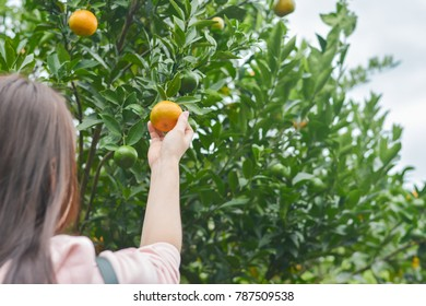 Close up woman hand holding orange in the garden.