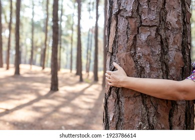 Close up of a woman hands holding around pine tree in pine trees forest