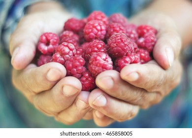 Close up of woman holding freshly picked raspberries