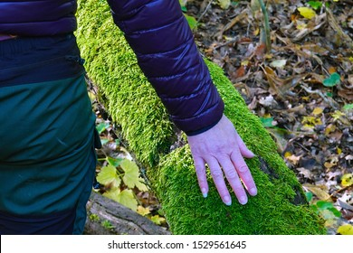 Close up of woman touching a fallen moss covered tree in autumn forest. Nature or eco therapy concept.