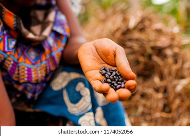 close up of woman in traditional african clothes holding black beans while working in farm in the contryside