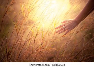 Close up of a woman's hand touching golden grass