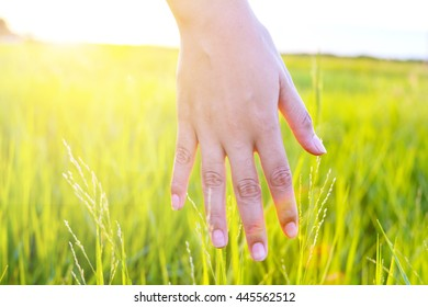 Close up of a woman's hand touching green grass.