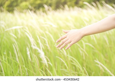 Close up of a woman's hand touching green grass in morning light