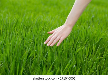 close up of a woman's hand touching the saturated grass, 'feeling nature'