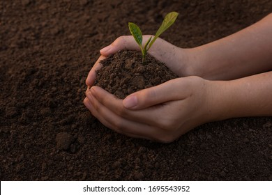 Close up Woman's hands holding a seedling to plant in the ground. The concept of growing plants in nature.