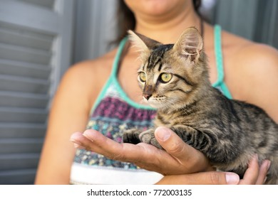 Close up of woman's hands holding up a small striped kitten with green eyes