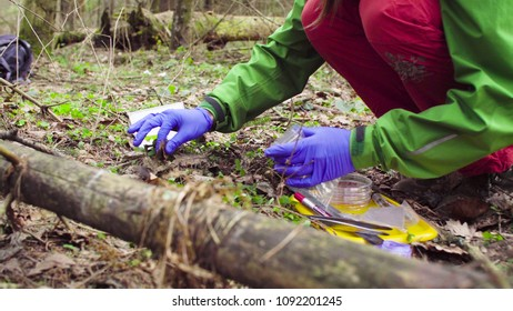 Close up woman's hands in protective gloves. Scientist ecologist in the forest taking samples of last year's foliage and putting it in a plastic bag.