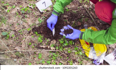 Close up woman's hands in protective gloves. Scientist ecologist in the forest taking sample of soil and putting it in a petri dish.