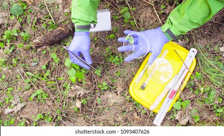 Close up woman's hands in protective gloves. Scientist ecologist in the forest taking samples of plants with tweezers and putting them in a petri dish.