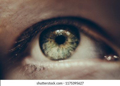 close up of women green eye