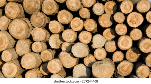 Close up of wood logs on pile as background