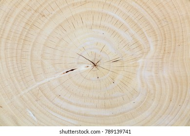 Close up wood texture of cut tree trunk background, background texture surface cut tree trunk wooden.