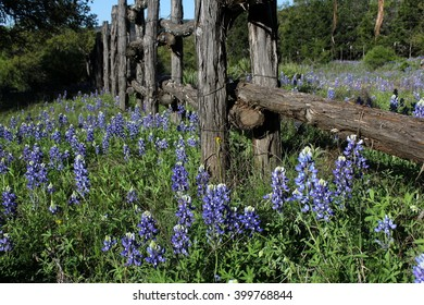 Close up of wooden fence in field of bluebonnets in Texas in the Spring