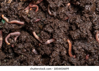 close up of worms on the ground