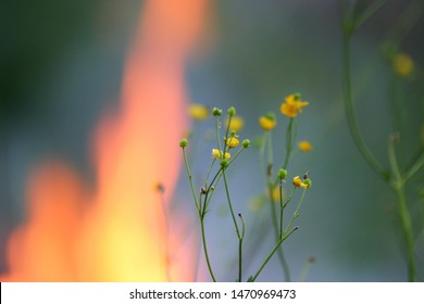 A close up of a yellow buttercup flower in front of fire. The atmosphere is magic. Selective focus