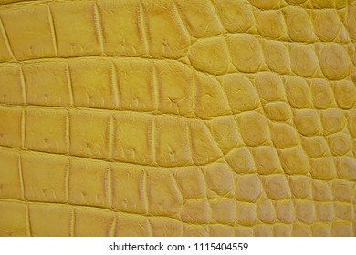 Close up of Yellow Crocodile,Alligator belly skin texture use for wallpaper background.Luxury Design pattern for Business and Fashion.Top view surface in backdrop.