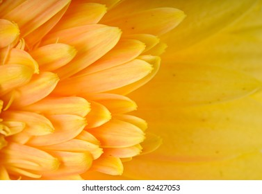 Close up of yellow daisy-gerbera's petal with copy space.