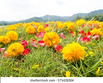 Close up yellow flower on green grass