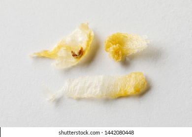 Close up yellow orange color earwax or cerumen sheet isolated on white paper background