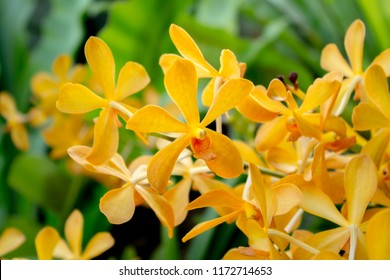 Five petals of yellow flower images stock photos vectors close up yellow orchid bouquet flowers five lobe petals mightylinksfo