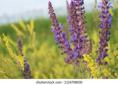 Close up of yellow and purple wildflowers on the prairie of South Dakota