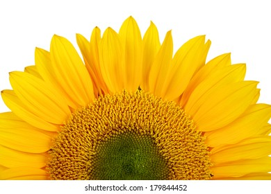 close up of yellow sunflower isolated over white