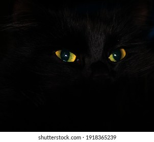 Close up yellow-green eyes of a black cat