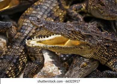 close up of young alligator