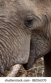 Close up of a young elephants head