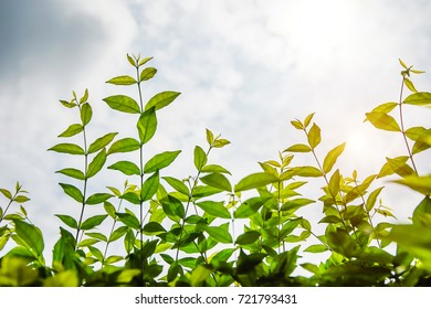 close up of young green leaves with soft light and sky background.