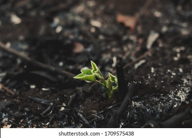 Close up young green sprout in coal of fire